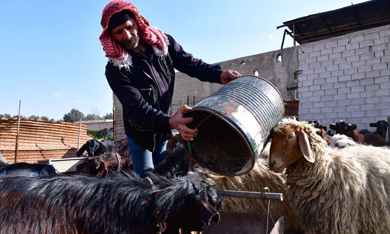 A Syrian shepherd feeds his goats at a farm in the countryside of the Syrian capital of Damascus, on Feb. 28, 2021.(Photo: Xinhua)