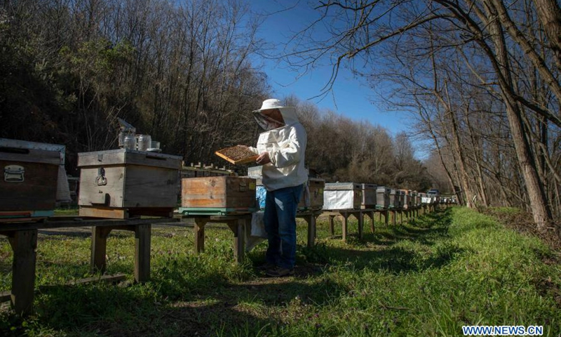 Ahmet Can, a beekeeper and head of Sile Beekeepers Agricultural Development Cooperative, checks a beehive at an apiary in Sile, a remote district of Istanbul, Turkey, on March 5, 2021. The number of hives across the country increased to 8 million in 2019, up from 5.6 million in 2010, with honey production from 81,000 tons to 109,000 tons, according to recent press reports. (Photo: Xinhua)