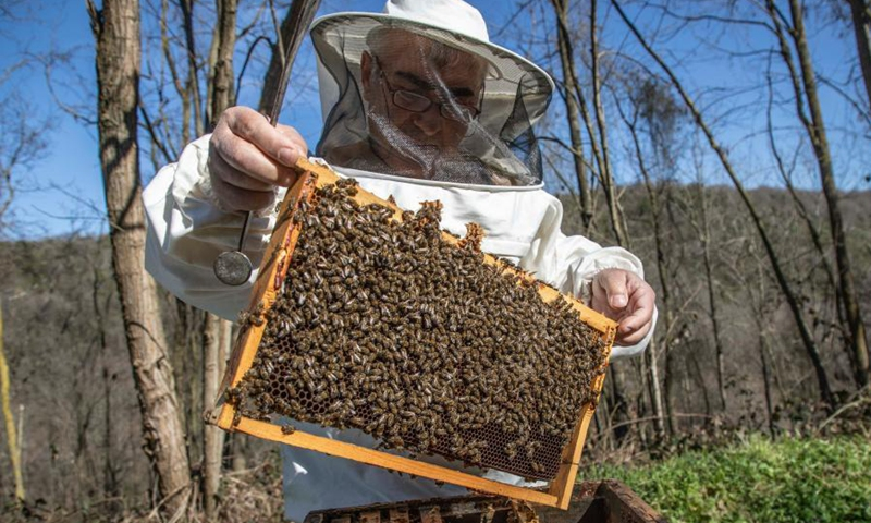 Ahmet Can, a beekeeper and head of Sile Beekeepers Agricultural Development Cooperative, checks a beehive at an apiary in Sile, a remote district of Istanbul, Turkey, on March 5, 2021. The number of hives across the country increased to 8 million in 2019, up from 5.6 million in 2010, with honey production from 81,000 tons to 109,000 tons, according to recent press reports.(Photo: Xinhua)