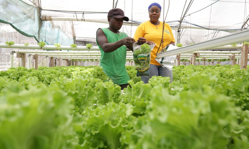 Workers take care of vegetables grown at a hydroponic farm in Dar es Salaam, Tanzania, March 15, 2021. (Photo: Xinhua)