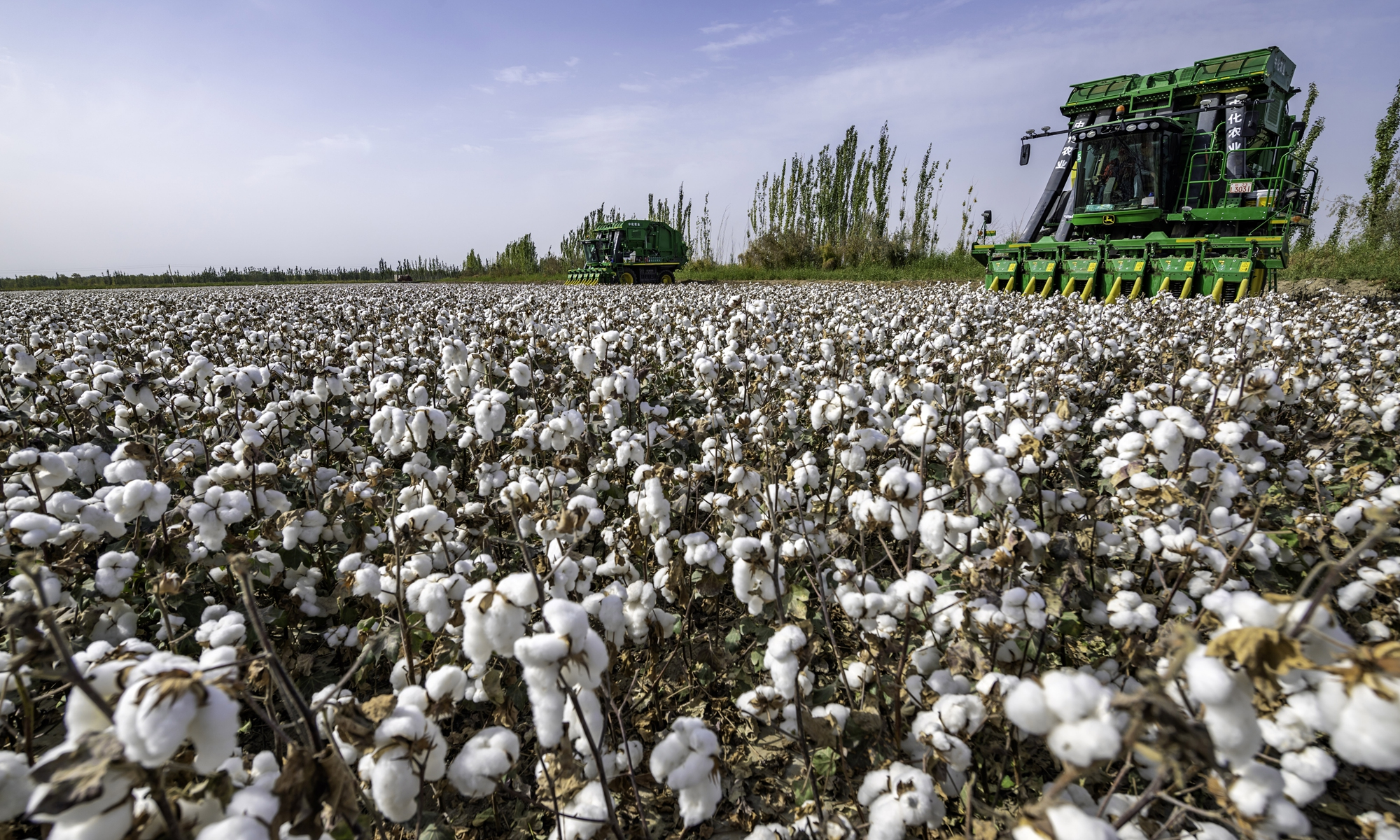 In a cotton-producing village in Bayingolin Mongolian Autonomous Prefecture, Northwest China's Xinjiang Uygur Autonomous Region, large-scale machines operate at full capacity to seize the harvest season on September 28, 2020. The total cotton plantation area in Xinjiang reached 24.19 million mu (1.6 million hectares) and around 16.90 million mu were harvested by machines in 2020, accounting for 70 percent of the plantation area. Photo: VCG