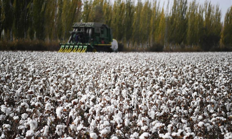 Photo taken on Oct. 25, 2019 shows a cotton harvesting machine working in a field in Awat County, northwest China's Xinjiang Uygur Autonomous Region. With a long history of cotton planting, Awat is known as the Town of Cotton in China. The county boasts high-quality cotton and high-efficiency in production. (Xinhua/Sadat)