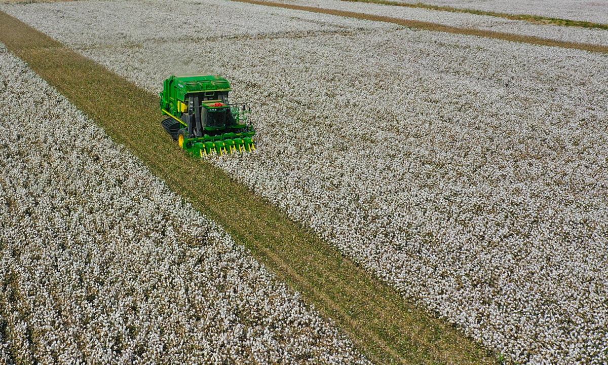 Xinjiang cotton Photo: VCG