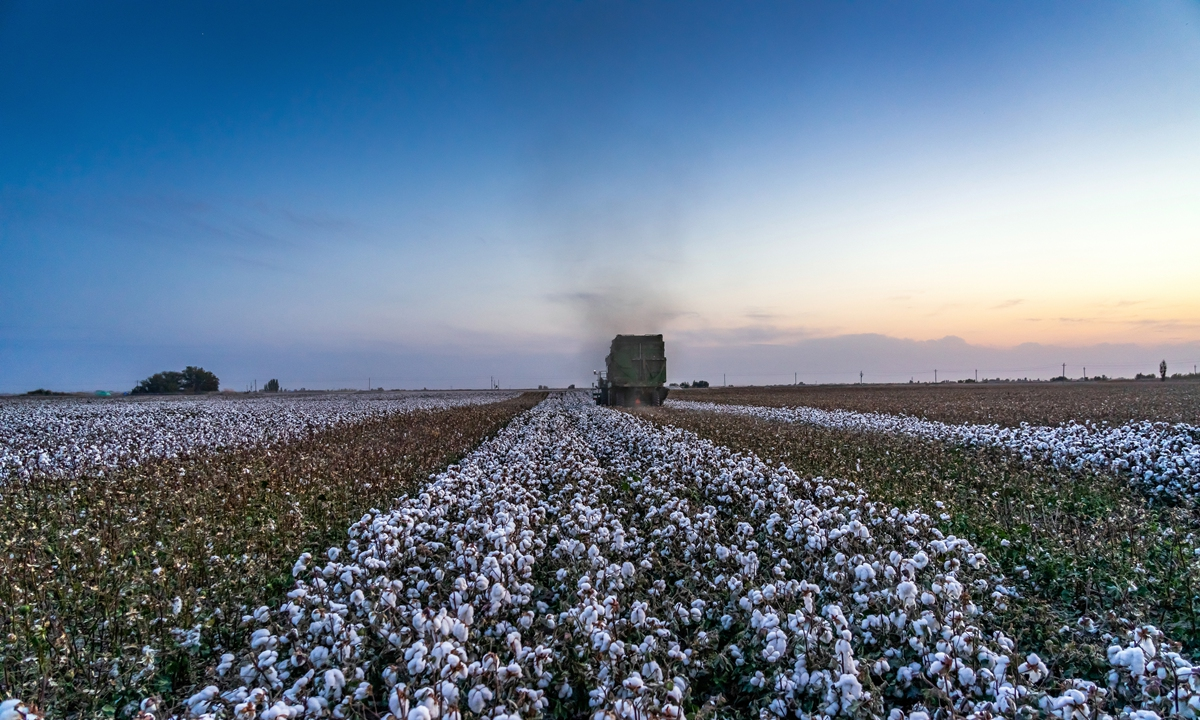 A harvester harvesting cotton at a cotton field in Manas County, Xinjiang. Photo: VCG