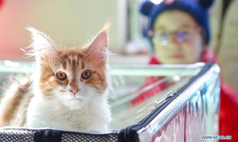 Клубы москвы кошек мурманск стриптиз бары