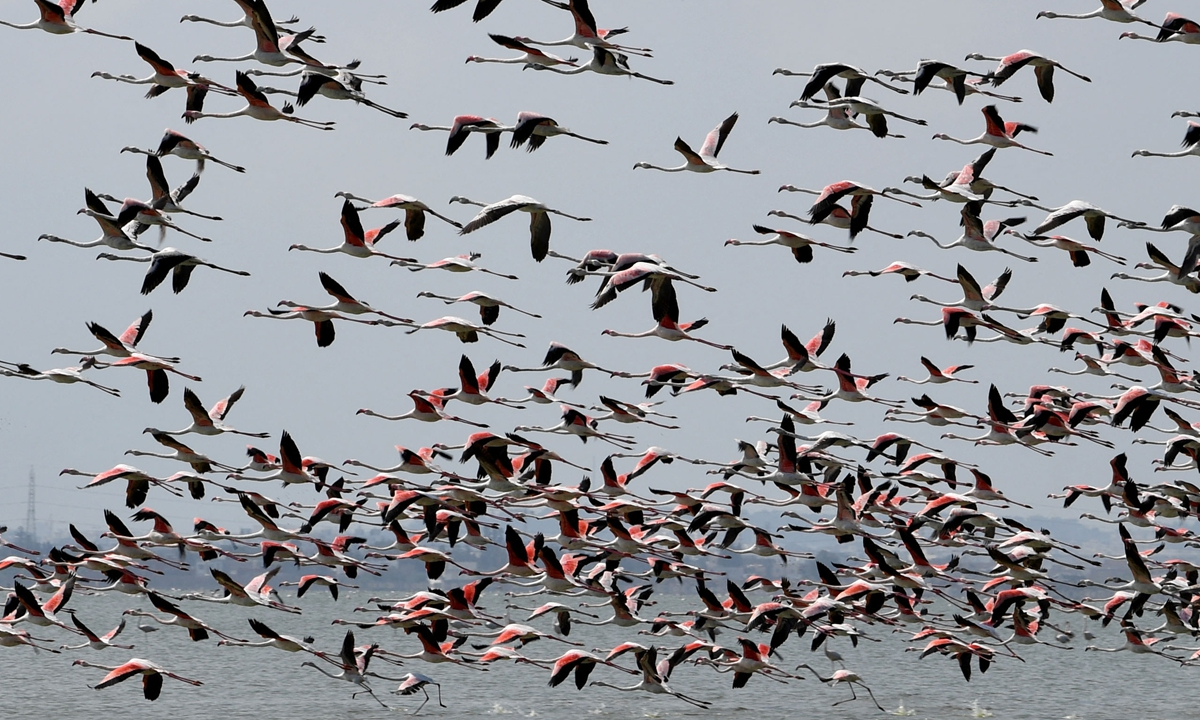 Flamingos fly over the Sijoumi mudflat, known as