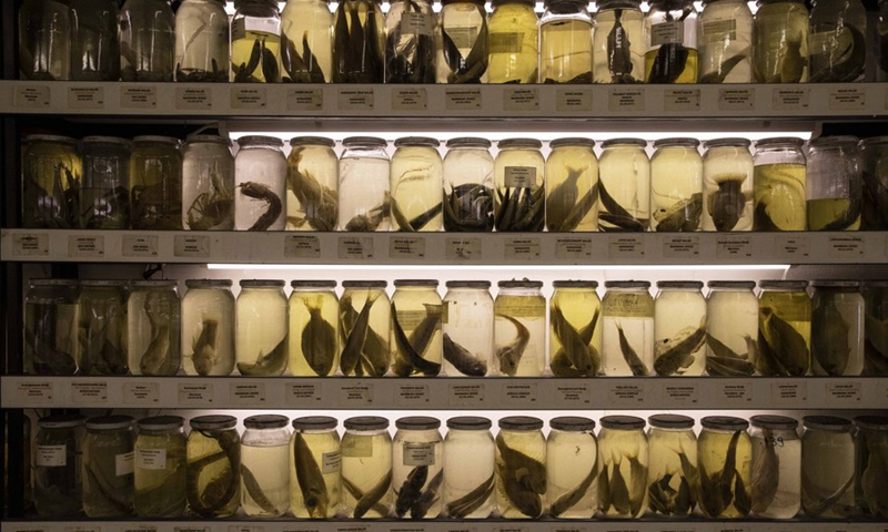 Photo taken on March 30, 2021 shows the rich collection of fish specimens at the only fish museum in Istanbul, Turkey.(Photo: Xinhua)