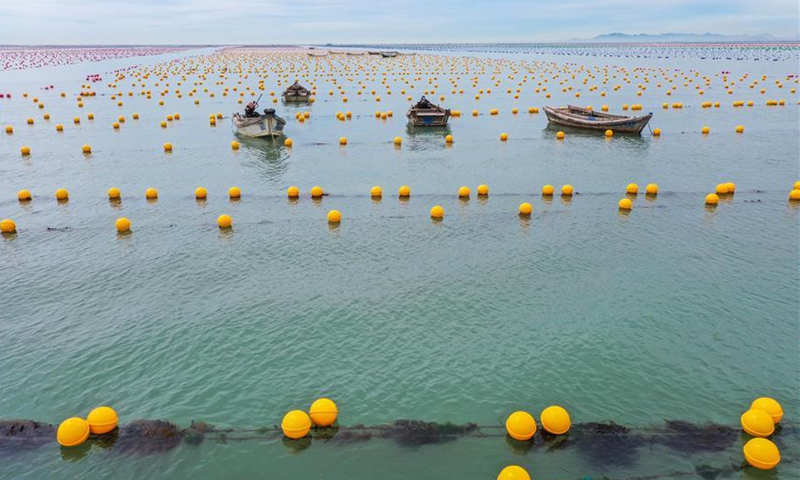 Aerial photo shows aquaculture floats at a sea farm in Rongcheng, east China's Shandong Province, July 26, 2020. Eco-friendly floats are widely used in the local aquaculture industry. (Photo by Li Xinjun/Xinhua)