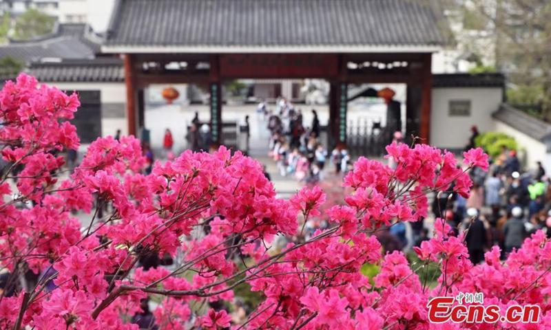 2021年4月14日拍摄的照片显示,杜鹃花盛开在中国东部江苏省南京市的明朝长城内门东段(1368-1644)。