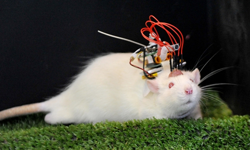 An experiment mouse