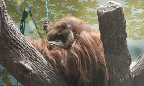 Sentai in the zoo. Photo: Sina Weibo