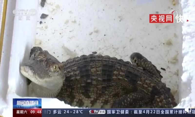 Screenshot of the Siamese crocodile from Sina Weibo