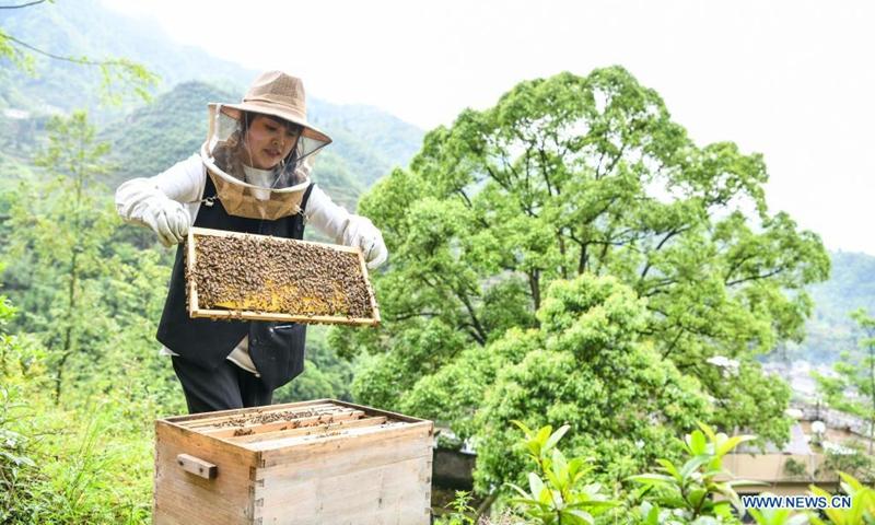 Yuan Xiaomei works at her bee breeding base in Nayong County, southwest China's Guizhou Province, April 28, 2021.(Photo: Xinhua)