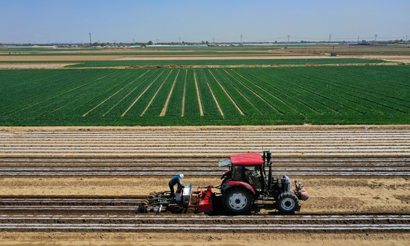 Aerial photo shows farmers sowing at a peanut farm in Yangjiatuo Village of Luanzhou City in north China's Hebei Province, April 18, 2021.Photo:Xinhua