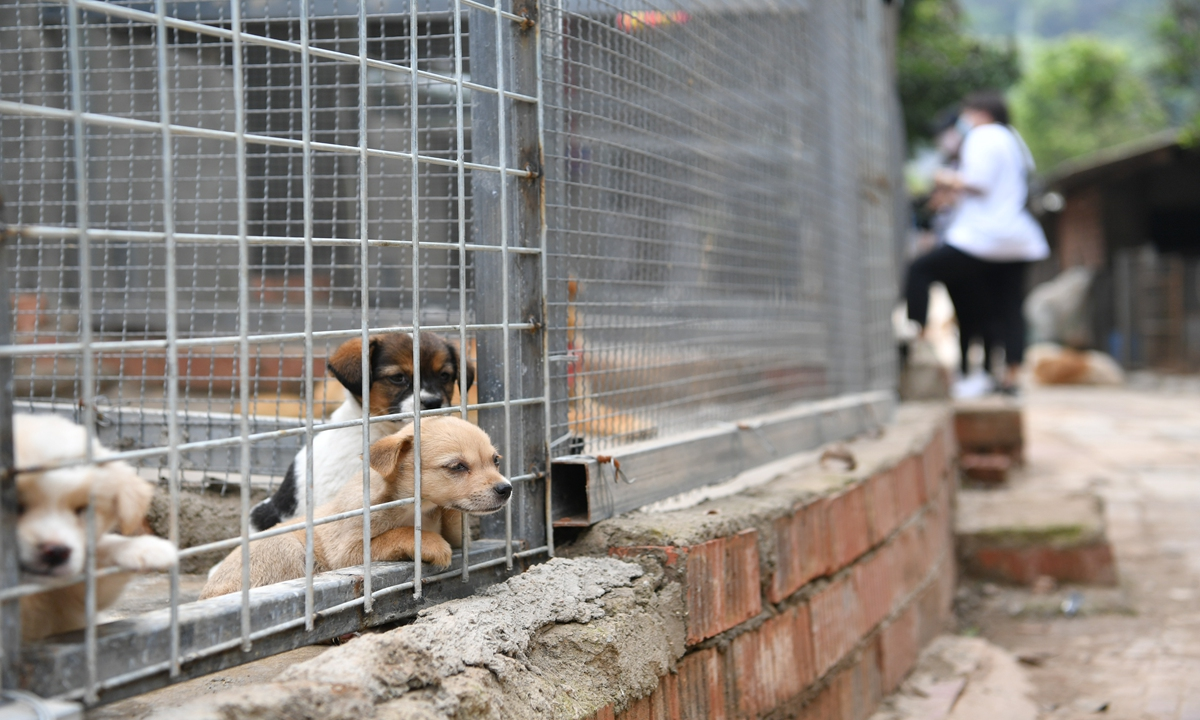 Over 100 animals received care at an animal helping center in Chengdu, Southwest China's Sichuan Province on May 7 after they were sold via blind boxes. Photo: VCG