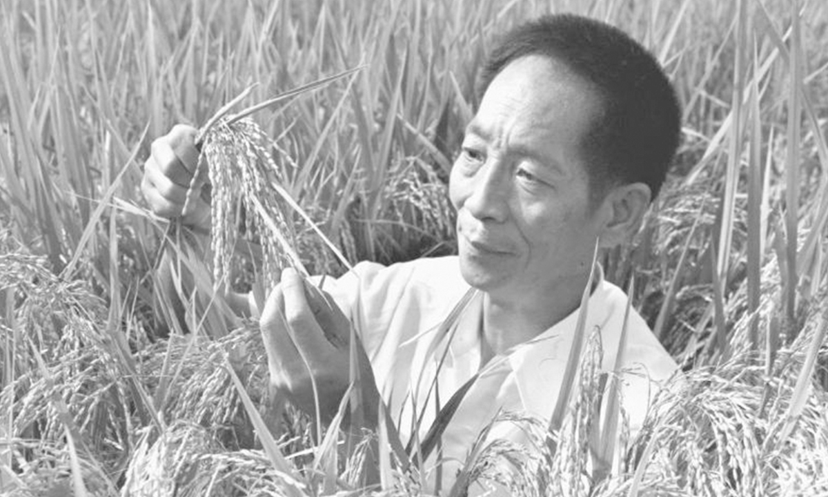 File photo taken in 1981 shows Yuan Longping selecting hybrid rice specimens for a lecture. Chinese scientist Yuan Longping, renowned for developing the first hybrid rice strain that pulled countless people out of hunger, died of illness at 91 on Saturday. (Xinhua)