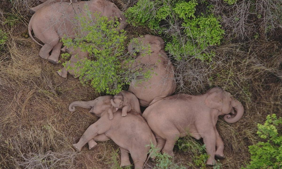 elephants Photo:VCG