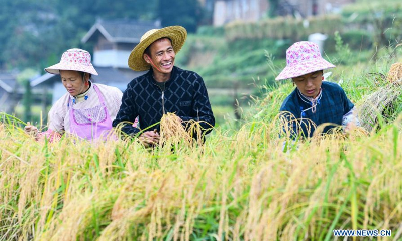 Farmers harvest rice at Jiache Village, Jiabang Township, Congjiang County of southwest China's Guizhou Province, Sept. 19, 2020.Photo:Xinhua
