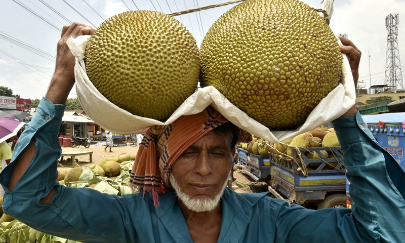 A laborer carries jackfruits at a market in Gazipur on the outskirts of Dhaka, Bangladesh, on June 27, 2021.(Photo: Xinhua)
