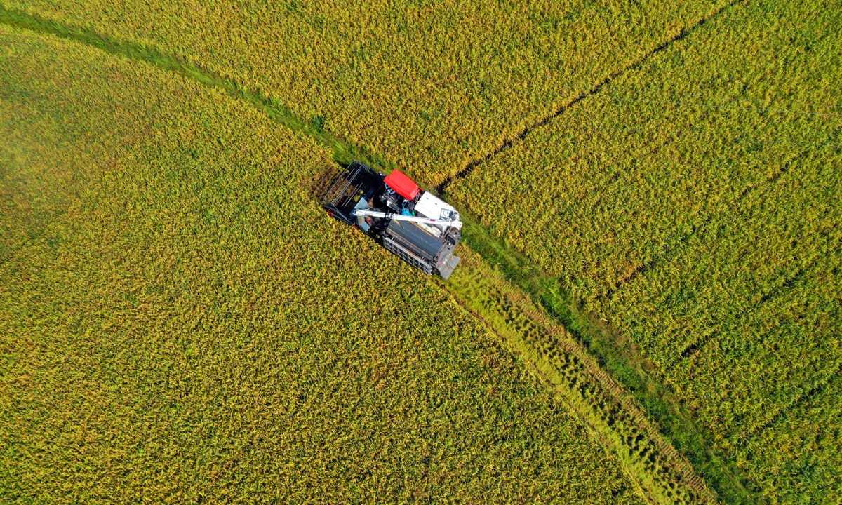 Farmers harvest early rice in Yongfeng, East China's Jiangxi Province on Tuesday. In the heat of the summer rush, farmers are busy harvesting 420,000 mu (28,000 hectares) of mature early rice to ensure that these summer grains are put into silos. China has set a grain harvest goal of 650 million metric tons and has achieved the target for six years in a row. Photo: VCG