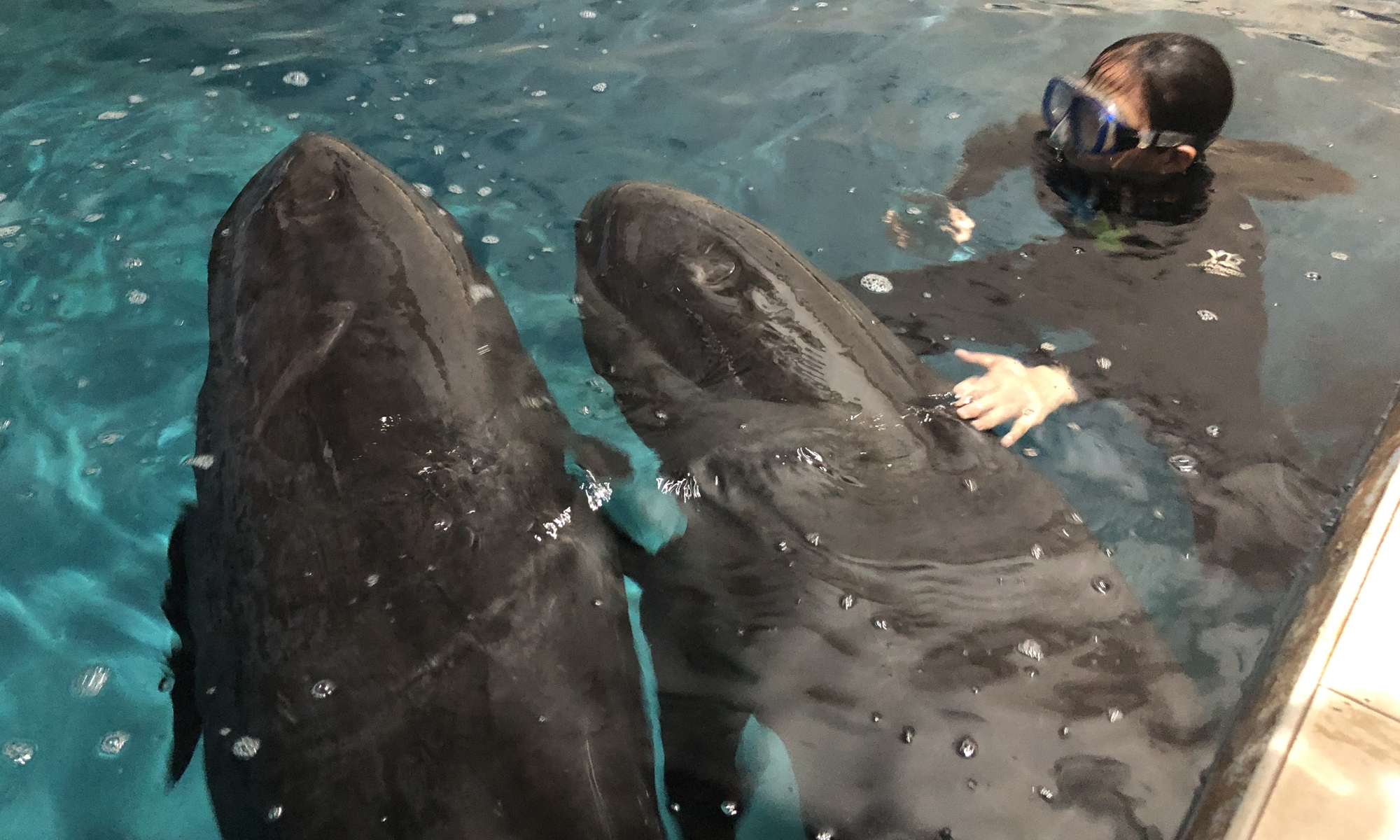 Among the nine rescued whales, two were sent to Taizhou Sea World. Photo: VCG