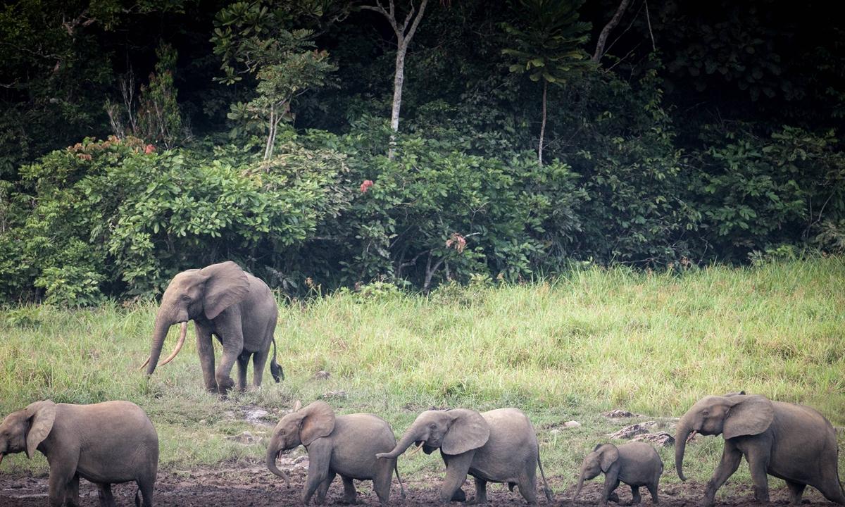 The Ivindo National Park in Gabon Photos: AFP