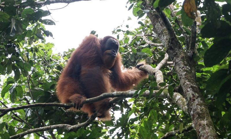 UN deforestation plan scrutinized after Indonesia debacle