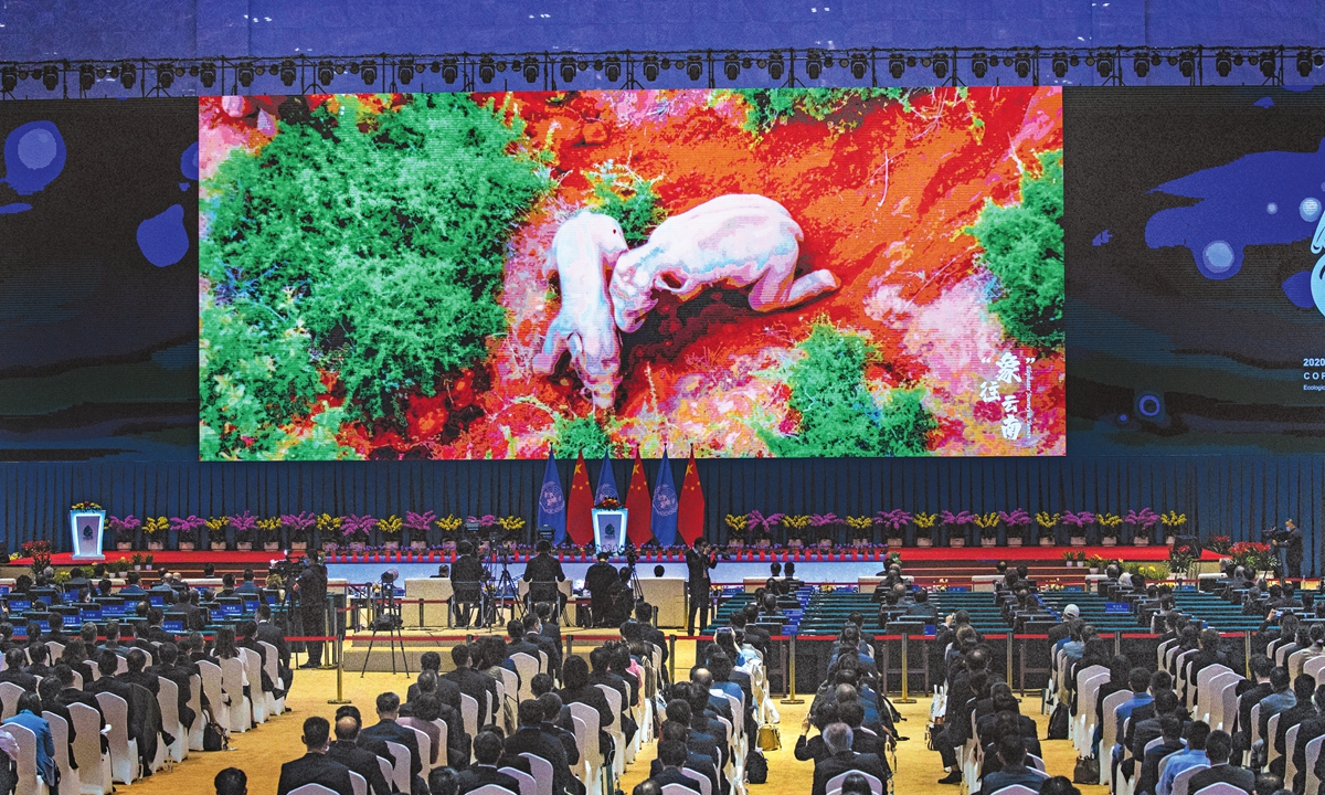 A video on the activities of a herd of wild Asian elephants that went astray in Southwest China's Yunnan Province in September is shown on a big screen at the 15th meeting of the Conference of the Parties to the UN Convention on Biological Diversity (COP15), in Kunming, capital of Yunnan Province, on Monday. (See story on Page 3) Photo: Li Hao/GT